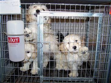 No Puppy Mills Canada